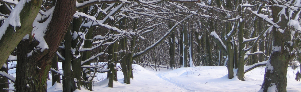 Winter in Wykeham Forest